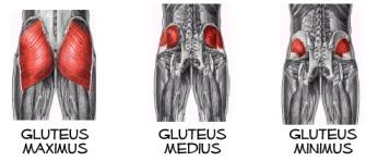 Diagram of the Gluteus Maximus, Medius and Minimus